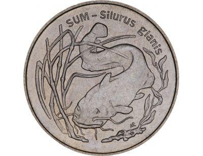2 zł – Sum (łac- Silurus glanis)
